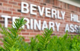 Beverly Hills Veterinary Clinic