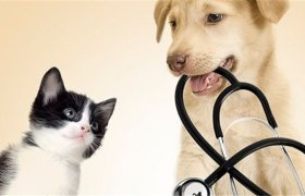Veterinary Hospital for Sale