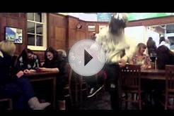 Harlem Shake Royal Veterinary College Nurses Edition