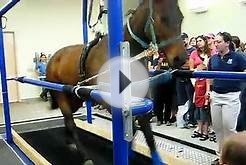 Horse on Treadmill at UC Davis School of Veterinary Medicine