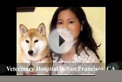 Veterinary Hospital San Francisco CA, San Francisco SPCA
